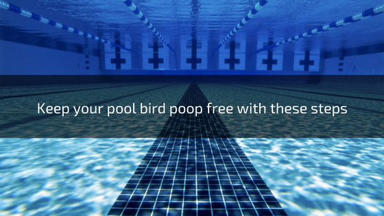 how to keep birds away from swimming pool troubleshooting pools